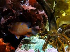 . (Kate Hedin) Tags: ocean california ca sea fish water aquarium bay monterey pacific row cannery