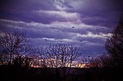 Americas chickens are coming home to roost... (mountain_doo2) Tags: light sunset sky sun tree clouds virginia vulture buzzard martinsville roost yabbadabbadoo d7000