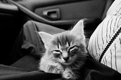 ..M.. (Le***Refs *PHOTOGRAPHIE*) Tags: bw cats white black animals cat chats nikon chat nb m bebe animaux poil chaton felin chatons d90 lerefs