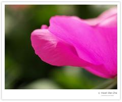 中心的盆栽花瓣 (Ache_Hsieh) Tags: flower digital olympus marco e500 zd 35mm35