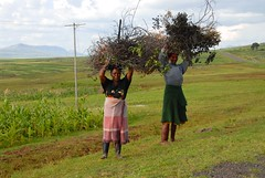 Hard Working Women in Lesotho (picaddict) Tags: corn lesotho maseru brennholz collectingfirewood malutimountains lesotho2009 womencarryingbrunches lesothoblankets