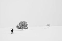 Man vs Wild (Antonio Carrillo (Ancalop)) Tags: blackandwhite españa white snow black tree blancoynegro blanco clouds canon landscape arbol spain nieve negro paisaje murcia nubes canondslr caravacadelacruz moratalla canon1740mm elsabinar campodesanjuan antoniocarrillo 5dmarkii ancalop