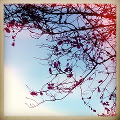 """#cherry #blossoms #spring #portland #oregon #pdx #tree • <a style=""""font-size:0.8em;"""" href=""""https://www.flickr.com/photos/61640076@N04/8538900457/"""" target=""""_blank"""">View on Flickr</a>"""