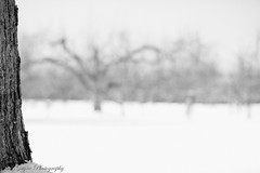 _MG_4585 (Bill Gagne Photography) Tags: winter blackandwhite snow monochrome canon bokeh connecticut 135 135mm 135l hartfordcounty canonef135mmf2lusm bristolconnecticut vsco billsphotos hartfordcountyconnecticut canoneos5dmkll vscopresets billgagnephotography