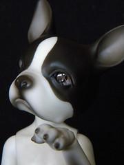 Trinket (left eye) (OctoberDolls) Tags: dog clock boston work ball october punk doll gear steam terrier soul bjd resin pup 37 abjd trinket jointed resinsoul
