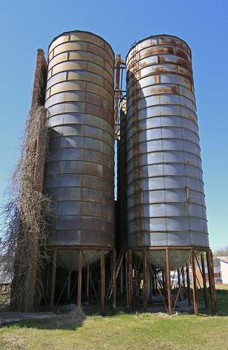 vines & silos