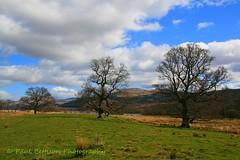 Three Trees (Freespirit 1950) Tags: rural landscape scotland countryside scenery perthshire lochtay killin