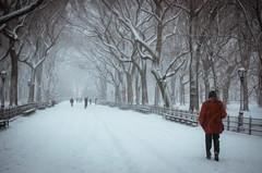 Winter in Central Park (Everita) Tags: winter snow newyork centralpark blizzard nikond5100
