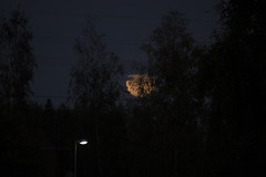 171. moonrise (sokram777) Tags: 365 171 moon streetlight moonrise night