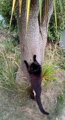 The Big Scratch#2 (Ilkhanid) Tags: ireland wicklow bray cat chat katz gato sylvester
