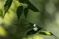 Vert (JiJi-aime) Tags: vert feuille ombre jeux lumire