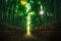Arashiyama Bamboo Forest (IzTheViz) Tags: arashiyama kyoto bamboo japan green japon forest grove