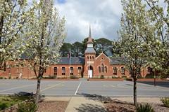 Beechworth Primary School (PhotosbyDi) Tags: beechworthprimaryschool beechworth school historic architecture blossom trees spring springtime nikond600 nikonf282470mmlens building