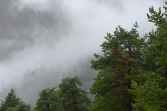 Im Regen und Nebel ber den Kunkelspass (balu51) Tags: ausflug spaziergang nebel regen wald kunkelspass september 2016 copyrightbybalu51