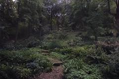 (Icker_Malabares) Tags: botanicgarden rome giardinobotanico fern fernwood ferny