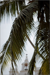 lady of immaculate conception, panjim (nevil zaveri (thank you for 10 million+ views :)) Tags: zaveri goa india architecture photography photographer images photos blog facade exterior stockimages photograph photographs panjim panaji nevil nevilzaveri stock photo photoshoot coconut palm trees church