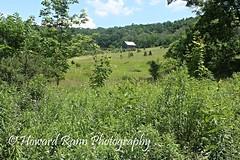 Pennsylvania Countryside (Framemaker 2014) Tags: farm field meadow barn wildflowers unityville pennsylvania montour county endless moountains united states america