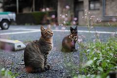 (ogizooo) Tags: sigma sdquattro sigma24mmf14art cat straycat snapshot