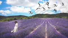 The Birds's keeper (Sirliss) Tags: sirliss bird lavender conceptual fineart lavande woman guardian sky summer field