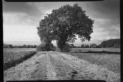 (salparadise666) Tags: busch pressman c 2x3 wollensak 101mm ygfilter fomapan 100 sheet film 80 asa caffenol rs nils volkmer hannover region germany september 2016 bw black white landscape nature rural tree analogue niedersachsen vintage camera medium format press calenberger land