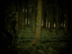 Through The Thicket (i-r-paulus) Tags: wood dartmoor thicket mossy trees woodland fernworthyforest
