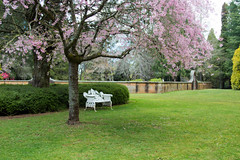 IMG_0640 (gsreejith) Tags: spring springblossom blossom flowers breenholdgardens mountwilson mtwilson nsw visitnsw