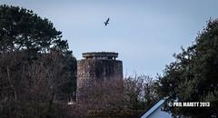 Moulin de Rozel (German observation tower M6) 012-365 (Jersey War Tours) Tags: war bunker german jersey 365 wartraces jerseysgermanbunkers bunkertraces jerseywwwtracesofwarjerseycombunkerwwiigermangerman