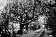 Spooky Snow (Rovers number 9) Tags: uk trees winter england snow minolta sony lancashire chorley a65 2013 euxton uksnow minoltaaf28135mmf445 sonya65 jan2013 yahoo:yourpictures=snow2013