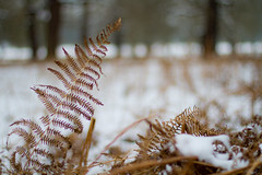 Against all odds (Usuf Islam) Tags: winter england snow london art nature canon woodland landscape bokeh wildlife 7d wimbledon atmospheric richmondpark wintry