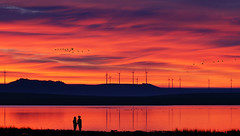 No es otro da soleado...../ It is not another sunny day.... (Oscar Martn Antn) Tags: espaa sunrise geese spain couple amanecer palencia gansos boadadecampos