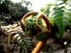 Monkey fist (hawaiiandog808) Tags: flowers trees fern nature hawaii hiking swamp kauai wetlands boardwalk plantlife naturewalk kokee monkeyfist alakaiswamp uploaded:by=flickrmobile flickriosapp:filter=nofilter