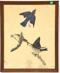 "84. after Audubon, ""Blue Bird"""