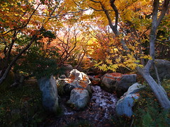 Sankeien Vol.15 三景園 (nineblue) Tags: autumn fall japan japanesegarden maple autumnleaves hiroshima autumncolors 紅葉 秋 滝 広島 sankeien もみじ 三景園