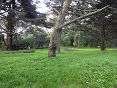 Golden gate park west (Nkipper) Tags: lab3 location2 2013 bio482 kippern