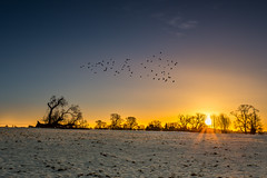 Revenage of The Fallen (Daniel Borg) Tags: camera light england sky sun snow birds silhouette sunrise landscape other unitedkingdom calm backlit fullframe hitech starburst 6d canon1740l formatt ultrawideangle gnd danielborg graduatednd littlewymondley 06nd canon6d