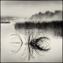 Ait (warmianaturalnie) Tags: bw white mist lake black water grass fog square landscape pond poland isle ait warmia