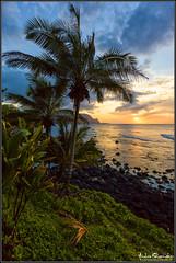 Paradisal (Andrew Shoemaker) Tags: ocean sunset sky seascape canon hawaii coast paradise pacific coconut andrew palm kauai coastline shoemaker paradisal