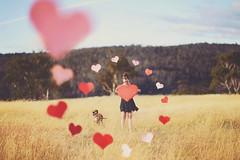 Happy Vday (anjie b) Tags: dog sunshine hearts nikon 85mm australia valentine d800 2013