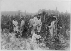 LC-USZ62-36651 AA Kids Picking Berries 1920 (Children's Bureau Centennial) Tags: 1920s black children child negro africanamerican libraryofcongress childlabor berrypicking africanamericanchildren dewberrypickers