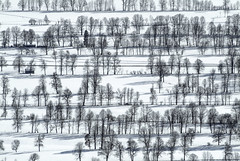 Magical Winter Scenery (Aerial Photography) Tags: schnee trees winter snow tree field by landscape mood feld row aerial line parallels bume baum deu luftbild alignment lenggries leaftree luftaufnahme obb lineoftrees bayernbavaria deutschlandgermany reihe laubbaum deciduoustree 26022003 baumreihe tl rowoftrees parallelen foliagetree feldgrenze fotoklausleidorfwwwleidorfde 8334022 s2p07703 gaisachlkrbadtlzwolfr gaisachlkrbadtlzwolfratshausen
