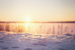 Snow Glow {Explored} (jennydasdesign) Tags: winter sunset sun sunlight lake snow texture nature grass sunshine backlight landscape frozen weed dof sweden bokeh beautifullight explore sverige sn vnern vrmland explored dt50mmf18sam sonyslta5