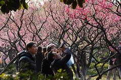 DSC_0096 (Baishiya_) Tags:  2013 prunus blossom  plum mume