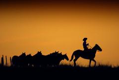Pra os dias que vm... (Eduardo Amorim) Tags: brazil horses horse southamerica field brasil criollo caballo cheval caballos mare campo cavalos pelotas pferde cavalli cavallo cavalo pferd riograndedosul pampa champ hest hevonen campanha brsil chevaux gua  yegua amricadosul hst  amriquedusud   sudamrica suramrica amricadelsur  sdamerika crioulo caballoscriollos criollos  tropillas  costadoce americadelsud tropilhas tropilla  crioulos cavalocrioulo americameridionale caballocriollo auffangen eduardoamorim cavaloscrioulos
