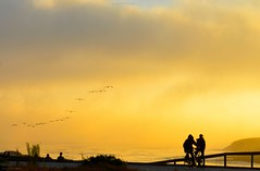 Santa Cruz Sunset with Pelicans (JohnCramerPhotography) Tags: ocean sunset seascape silhouette yellow