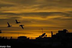 _DSC0737 (mary~lou) Tags: sunset nature silhouette three nikon flight manmade maryfletcher 15challengeswinner challengegamewinner mary~lou