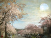 Pink boulevard (Nick Kenrick..) Tags: moon spring blossom sakura victoriabc sakurahanami vancouverstreet tatot