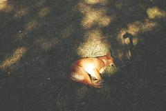 los perros tambin son lindos (aN ACciDenT) Tags: dog sol flickr foto perro paseo siesta otoo caminata sombras calor unversidad amorseco carimelo