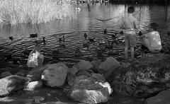 Duck Pond (arbyreed) Tags: arbyreed bw infrared 665nanometerinfrared blackandwhiteinfrared ducks children child kids water pond duckpond feedingducks