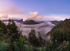 Mount Bromo (narenrit) Tags: bromo mountain mist light sun sunrise cloud sky morning valcano tree view beauty hill top scenic indonesia tropical asia asian east cliff travel trip mount