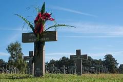 German war cemetery (thomas druyen) Tags: soldatenfriedhof ysselsteyn holland 2weltkrieg kriegsgrbersttte limburg venray europa mahnmal kreuz blumen soldat tod himmel bume wiese blume blumengesteck